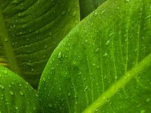 Water drop on green leaf Stock Photos