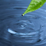Water drop from green leaf Stock Photos