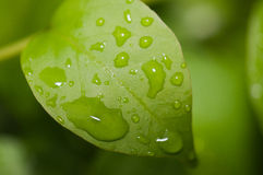 Water drop on green leaf Royalty Free Stock Photography