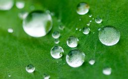 Water drop on green leaf Royalty Free Stock Image