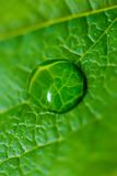 Water drop on the green leaf Stock Image