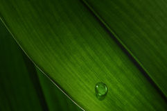 Water Drop on a green leaf. Macro of a water drop on a green leaf Stock Image