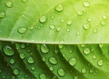 Water drop on green leaf closeup Stock Photos