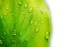 Water drop on green leaf Stock Photography