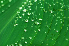 Water drop on green leaf lines. Exotic garden after rain. Wet season in tropics. Stock Photos