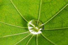 Water drop on green leaf Stock Image