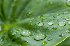 Water drop on the green leaf Stock Images