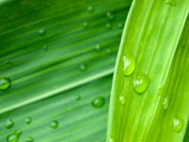Water drop on  green leaves Stock Photos