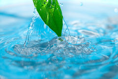 Water drop and green leaves stock image