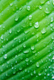Water drop on green leaves blur Stock Photo
