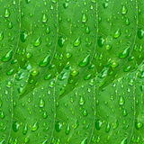 Water drop on green leaves nature background Stock Photography