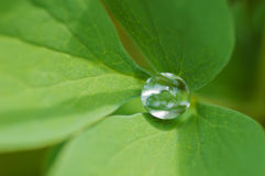 Water drop inside green leaf Stock Images