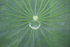 Water drop inside leaf Royalty Free Stock Images