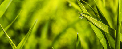 Water drop. Its water drop on a grass in Hungary royalty free stock images