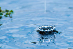 Water drop. Drop of water in the lake Royalty Free Stock Photos
