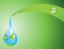 Water drop and leaf Stock Image