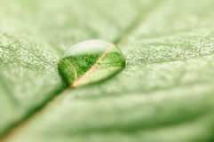Water drop on leaf Stock Image