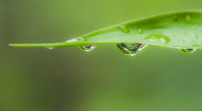 Water drop leaf Stock Images