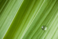 Water drop on a leaf Royalty Free Stock Photography