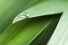 Water drop on a leaf Royalty Free Stock Image