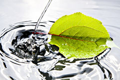 Water drop and leaf. Water drop in the water with a water drop Royalty Free Stock Photos