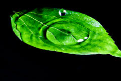 Water drop and leaf. Water drop falling on a leaf Stock Photos