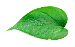 Water Drop on Leaf Royalty Free Stock Photos