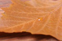 Water drop on the leaf Stock Photo