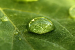 Water drop on leaf. Macro of a water drop on a green leaf Stock Photos