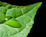 Water drop on the leaf. Water drop on the green leaf Stock Image