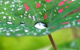 Water Drop On A Leaf Royalty Free Stock Photos