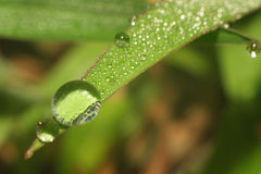 Water drop on leaf Stock Images