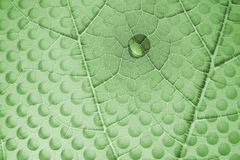 Water Drop on Leaf with Glass Holes Royalty Free Stock Images