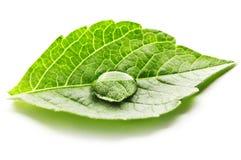 Water drop on leaf macro Stock Image