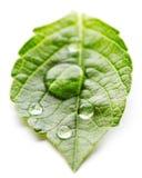 Water drop on leaf macro Stock Photo