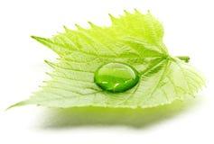 Water drop on leaf macro. Water drop on leaf  on white background macro Stock Image
