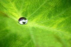 A water drop on the leaf Royalty Free Stock Photos