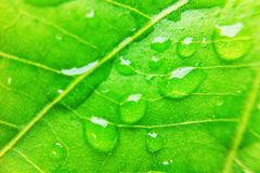 Water drop on leaf Royalty Free Stock Photography
