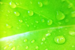Water drop on leaf Royalty Free Stock Photo