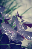 Water drop on leaf Stock Photography