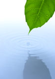 Water drop and leaf with ripple and reflection Stock Photography