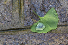 A water drop on a leaf on the sidewalk Stock Photography