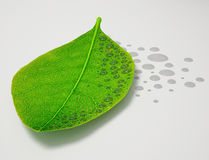 Water Drop Leaf Stock Photography