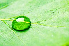 Water drop on leaf. Studio macro shot Royalty Free Stock Photography