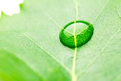 Water drop on leaf Royalty Free Stock Images