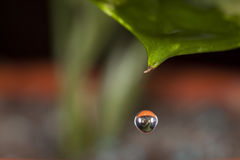 Water drop on a leave Stock Image