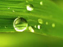 Water drop on leaves  01 Stock Photography