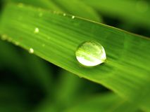 Water drop / leaves  01 Royalty Free Stock Photos