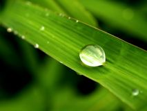 Water drop on leaves  08 Royalty Free Stock Photo