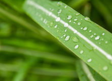 Water drop. On Leaves grass stock image